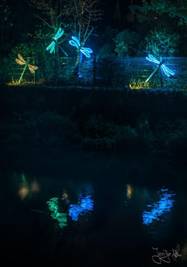 Libellen - Kronach leuchtet