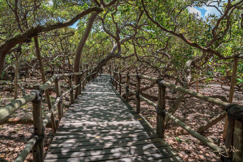 Der größte Cashewbaum der Welt - Gehwege sind nicht überlaufen